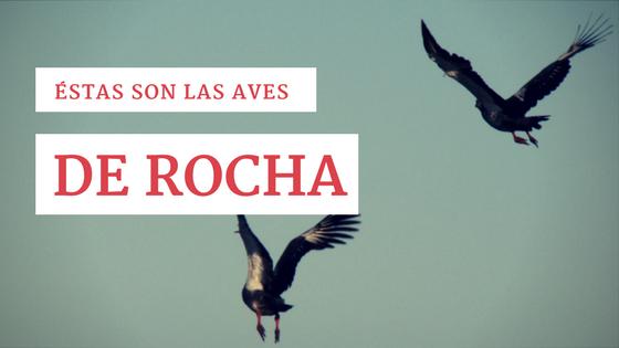Qué aves puedes conocer en Rocha