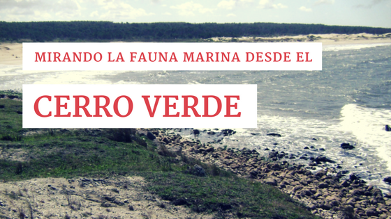 Mirando la fauna marina desde el Cerro Verde